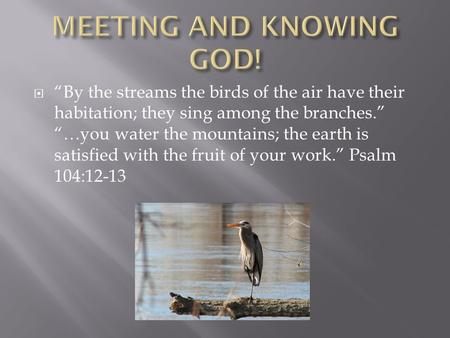 " ""By the streams the birds of the air have their habitation; they sing among the branches."" ""…you water the mountains; the earth is satisfied with the."