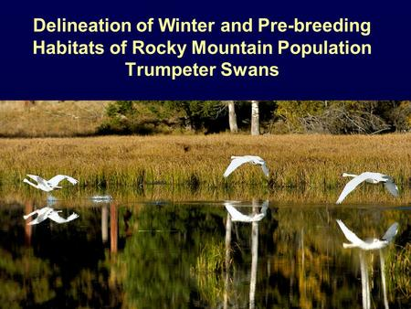 Delineation of Winter and Pre-breeding Habitats of Rocky Mountain Population Trumpeter Swans.