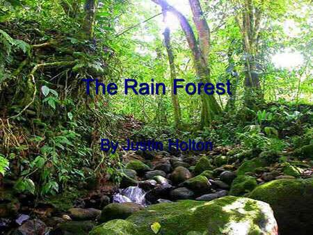 The Rain Forest By Justin Holton.