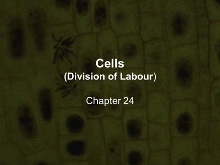 Cells (Division of Labour) Chapter 24. In this chapter, you will learn… that cells of similar structures are organised into tissues that several tissues.
