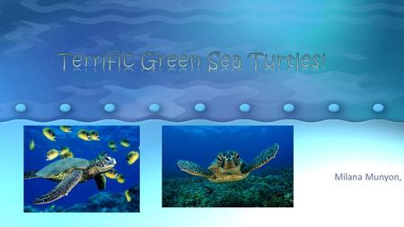 Terrific Green Sea Turtles!