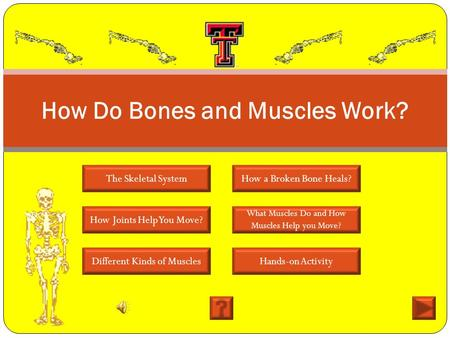 How Do Bones and Muscles Work?