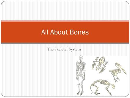 All About Bones The Skeletal System.