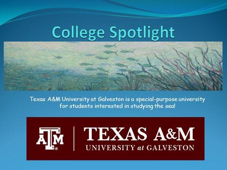 Texas A&M University at Galveston is a special-purpose university for students interested in studying the sea!