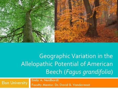 Geographic Variation in the Allelopathic Potential of American Beech (Fagus grandifolia) Emily A. Neidhardt Faculty Mentor: Dr. David B. Vandermast Elon.