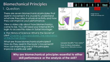 1. Question There are seven biomechanical principles that assist in movement. It is crucial to understand what role they play in physical activity and.