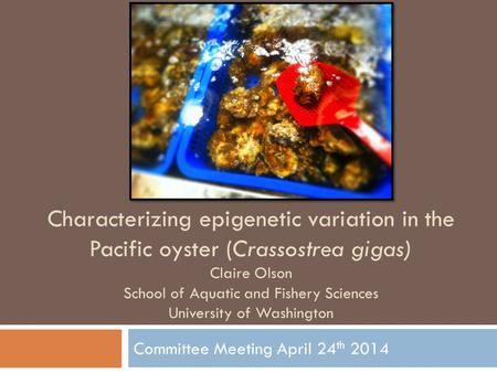 Committee Meeting April 24 th 2014 Characterizing epigenetic variation in the Pacific oyster (Crassostrea gigas) Claire Olson School of Aquatic and Fishery.