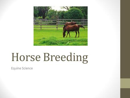 Horse Breeding Equine Science. Horses… Are spring and summer breeders (long day) – April – June Puberty: Mares and Stallions – 12-15 months, don't breed.