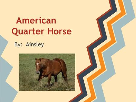 American Quarter Horse By: Ainsley. Quater horses originated in the late 1700's. They were brought to the southeast United States by Spanish conquistadors.