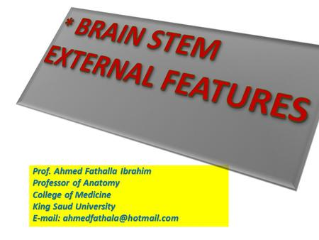 * BRAIN STEM EXTERNAL FEATURES