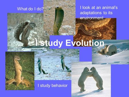 What do I do? I study behavior I look at an animal's adaptations to its environment I study Evolution.