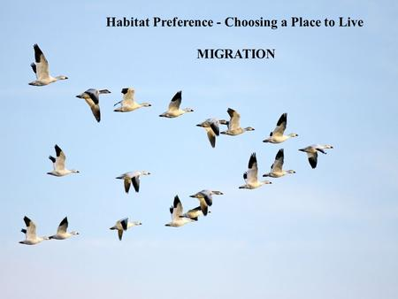 Habitat Preference - Choosing a Place to Live MIGRATION.