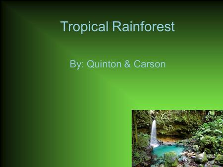 Tropical Rainforest By: Quinton & Carson. Animals in the Rainforest A three-striped poison dart Pond lives in the Rainforest. A Male Mandrill lives in.