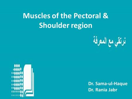 Muscles of the Pectoral & Shoulder region Dr. Sama-ul-Haque Dr. Rania Jabr.