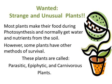 Wanted: Strange and Unusual Plants!! Most plants make their food during Photosynthesis and normally get water and nutrients from the soil. However, some.