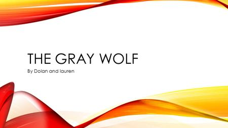 THE GRAY WOLF By Dolan and lauren. THE GRAY WOLF Slide 1: Introductory Paragraph Slide 2: Anatomy/Physical Description Slide 3 : Facts Slide 4 : Diet/Food.