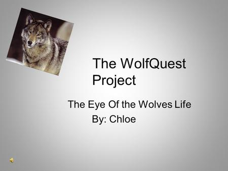 The WolfQuest Project The Eye Of the Wolves Life By: Chloe.