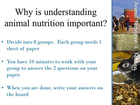 Why is understanding animal nutrition important?