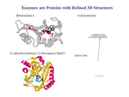 Enzymes are Proteins with Defined 3D Structures Ribonuclease A 2,3-dihydroxybiphenyl 1,2-dioxygenase (BphC)  -chymotrypsin Active site: