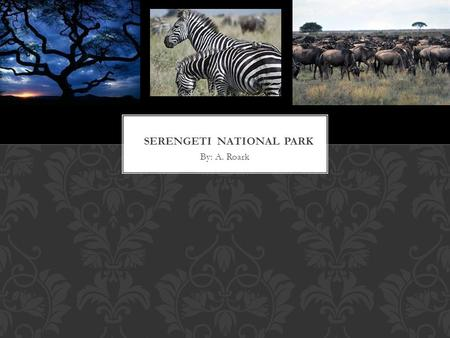 By: A. Roark. Serengeti National Park is undoubtedly the best-known wildlife sanctuary in the world. With more than two million Wildebeest, Half a million.