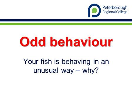Odd behaviour Your fish is behaving in an unusual way – why?