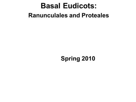 Basal Eudicots: Ranunculales and Proteales