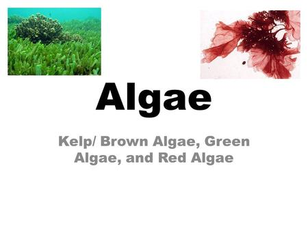 Algae Kelp/ Brown Algae, Green Algae, and Red Algae.