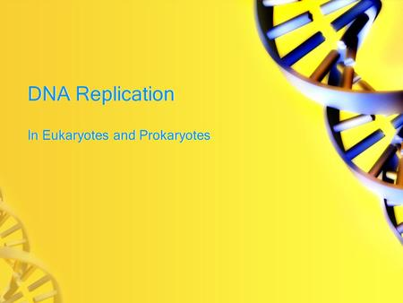 DNA Replication In Eukaryotes and Prokaryotes. BOCA What are the nucleotide bases for DNA? Which bases bond together?