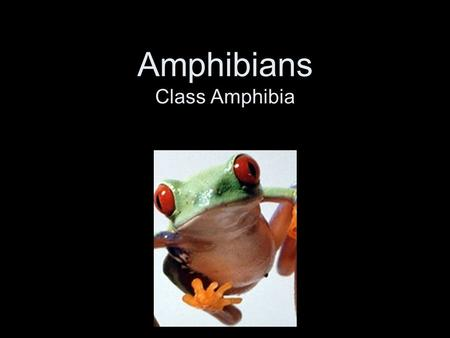 Amphibians Class Amphibia. Amphibians Animals that can live on land and in water Chinese Giant Salamander.