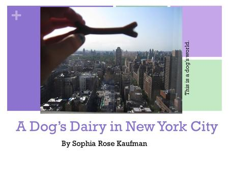 + A Dog's Dairy in New York City By Sophia Rose Kaufman This is a dog's world.
