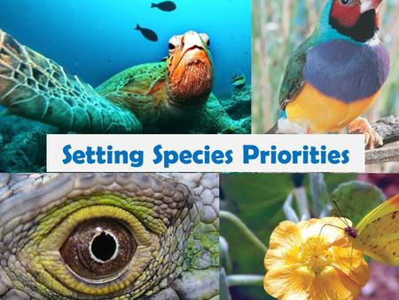 Setting Species Priorities. Purpose: The purpose of this activity is to get you to think like a conservation biologist by setting conservation priorities.