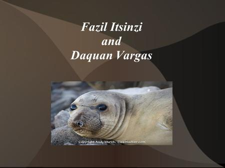 Fazil Itsinzi and Daquan Vargas. Northern Seal Callorhinus ursinus Females: 19 years Males: 13 years Northern fur seals live in the North Pacific Ocean.