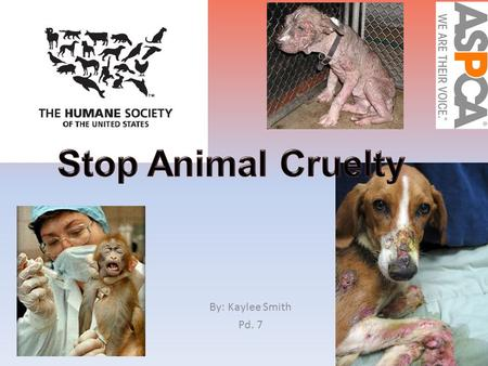 By: Kaylee Smith Pd. 7. Making a change Animal Abuse- the infliction of suffering or harm upon animals. If we stop animal cruelty we could save up to.
