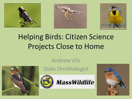 Helping Birds: Citizen Science Projects Close to Home Andrew Vitz State Ornithologist.