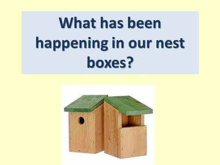 What has been happening in our nest boxes?. Can you remember why birds need boxes in autumn and winter? Why do birds need nest boxes in spring?