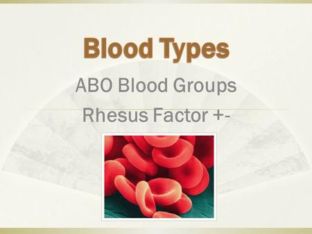 ABO Blood Groups Rhesus Factor +-