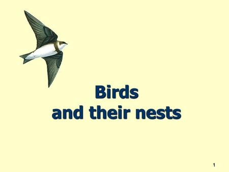 Birds and their nests 1. Why do birds have nests? They need a place that is safe They need a place that is safe They need a place where there is the kind.