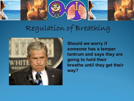 Regulation of Breathing Should we worry if someone has a temper tantrum and says they are going to hold their breathe until they get their way?