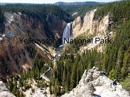 Yellowstone National Park By Will. How global warming is affecting the environment In Yellowstone global warming is affecting the wild life in the park.
