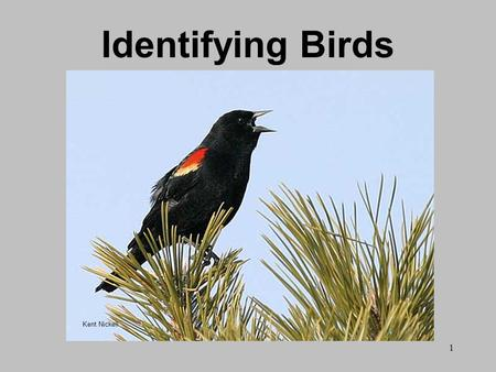 1 Identifying Birds Kent Nickell. 2 Birdwatching Ethics Support bird and habitat conservation efforts. Exercise restraint when viewing, recording, and.