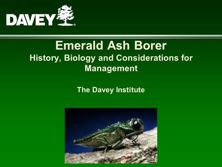 Emerald Ash Borer History, Biology and Considerations for Management The Davey Institute.