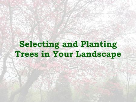 Selecting and Planting Trees in Your Landscape. Tree Selection  Matching the right tree to your site is the most important aspect of tree selection.