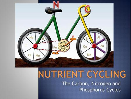 The Carbon, Nitrogen and Phosphorus Cycles