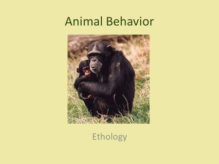 Animal Behavior Ethology.