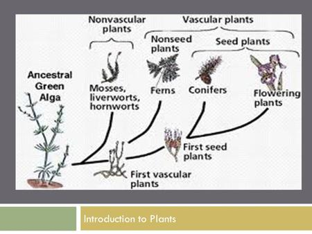 Introduction to Plants. What is a Plant?  Multicellular  Eukaryotic  Photosynthetic  Has cell walls containing cellulose  Lacks mobility.