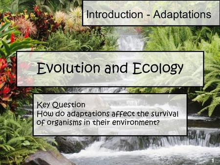 1 Evolution and Ecology Key Question How do adaptations affect the survival of organisms in their environment? Introduction - Adaptations 1.