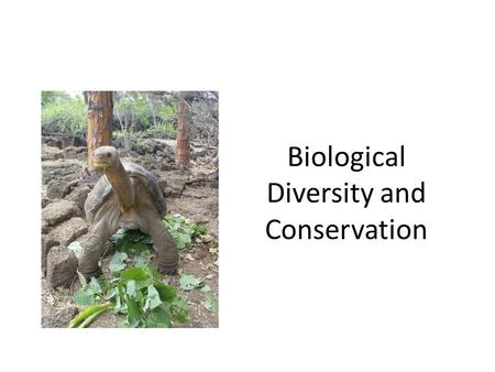 Biological Diversity and Conservation. What is Biodiversity? The variety of life in an area that is determined by the number of different species in that.