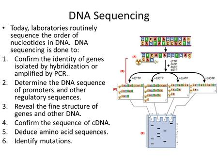 DNA Sequencing Today, laboratories routinely sequence the order of nucleotides in DNA. DNA sequencing is done to: Confirm the identity of genes isolated.