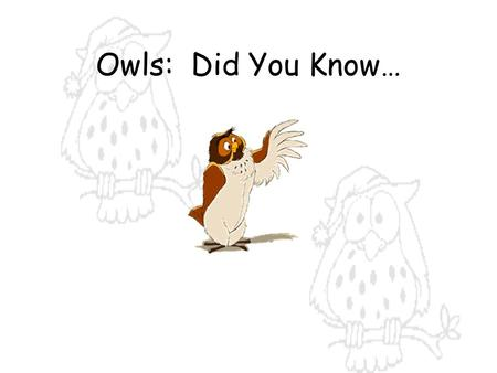 Owls: Did You Know….