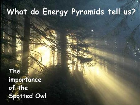 What do Energy Pyramids tell us? The importance of the Spotted Owl.